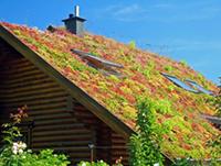 La toiture végétalisée à Joannas
